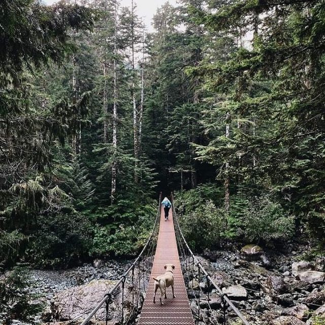 Hiking in the Campbell River Region offers a myriad of majestic choices to all ages and skill levels. Explore old-growth forests, amble along the ocean, discover hidden beaches, or take in panoramic peak views. We love seeing what hiking gems you find while out and about in nature! Tag your photos with #strathconacollective to share them with us!   📸 @islandadventures13 and @bluetreephotography via #strathconacollective #createplayexplore #discovercampbellriver #strathconaregion #explorebc #beautifulbc #vanislewild #explorevanisle #explorevancouverisland